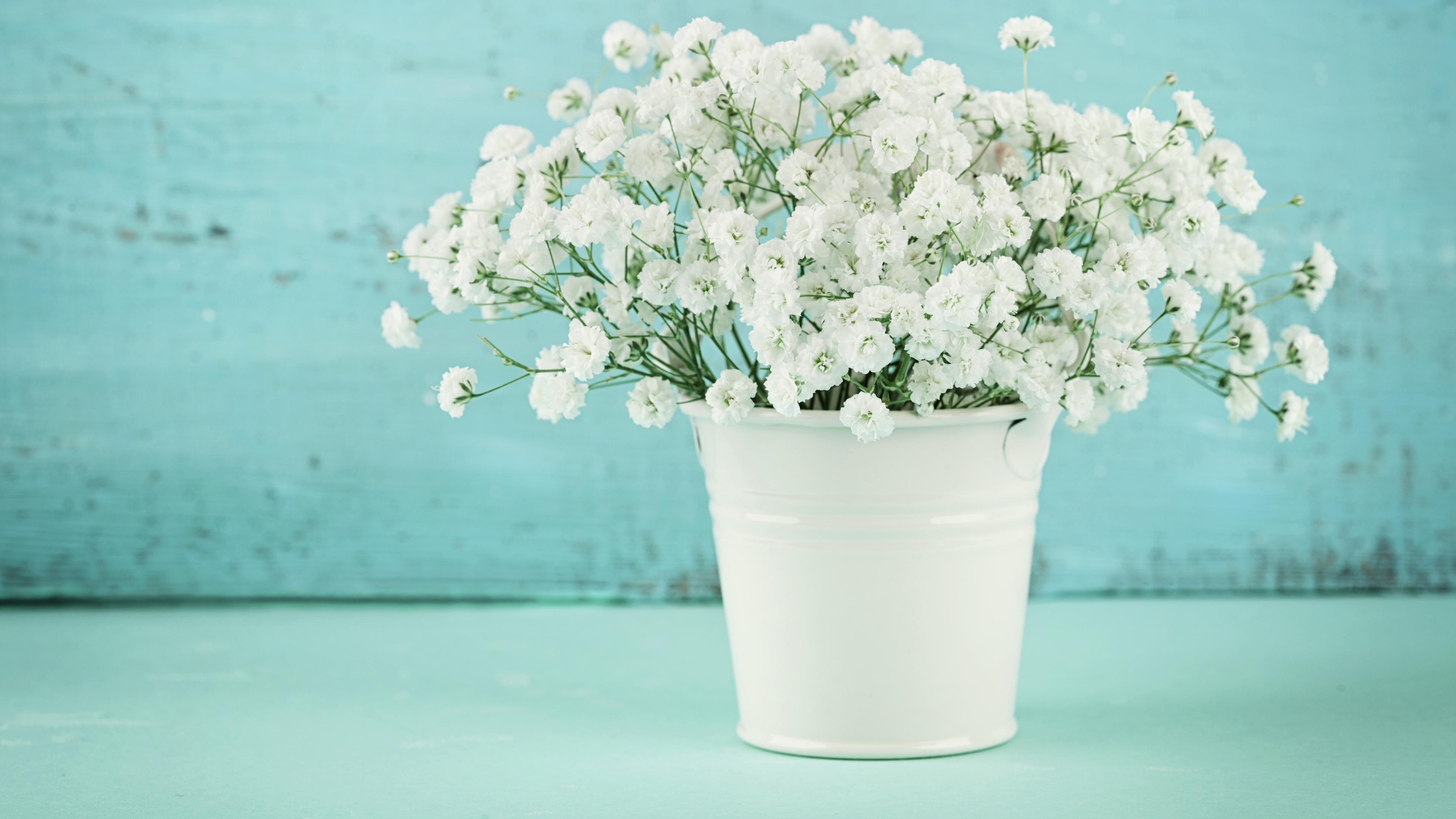 Close-up of white baby's breath flowers in a white pot