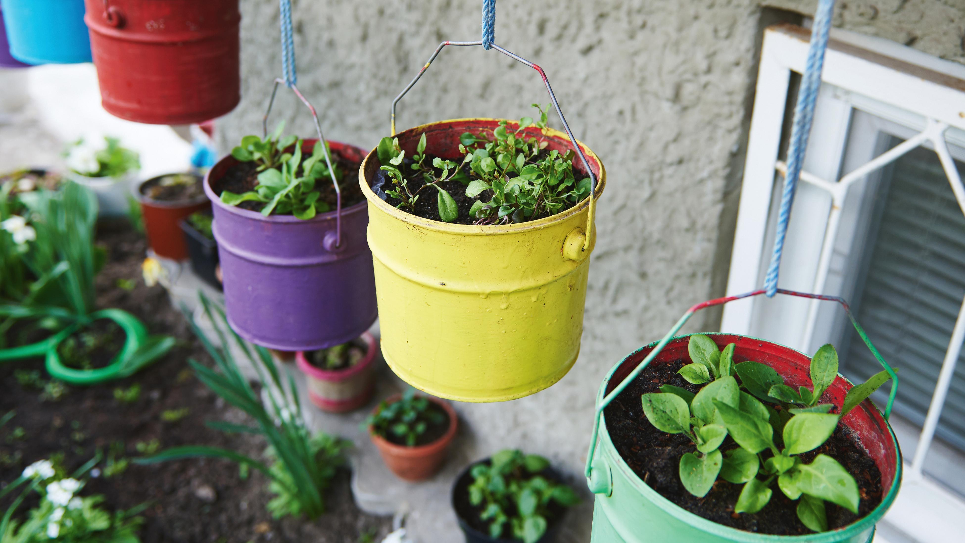 Plants growing in repurposed bucket
